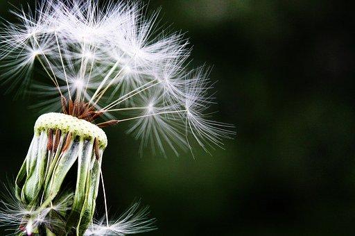 Pollen allergia és mit tehetünk ellene?